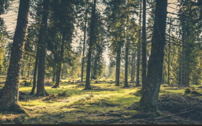 Offiziellen Förderaufruf der ILE Donau-Wald